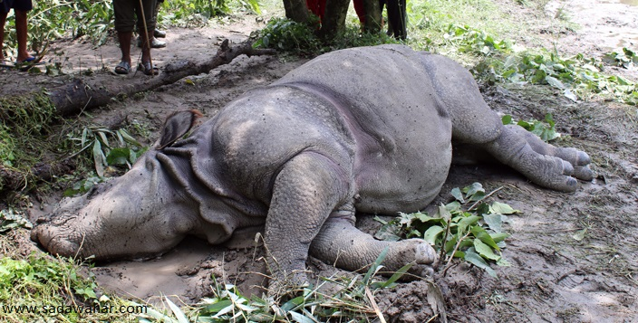 Rhino poaching a project for CNP